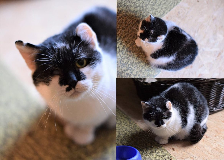 Helenka - kočka k adopci