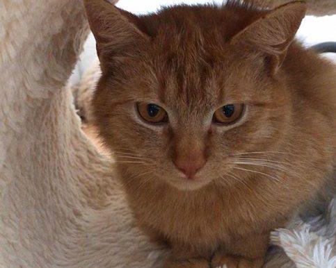 Garfield (Preclík)
