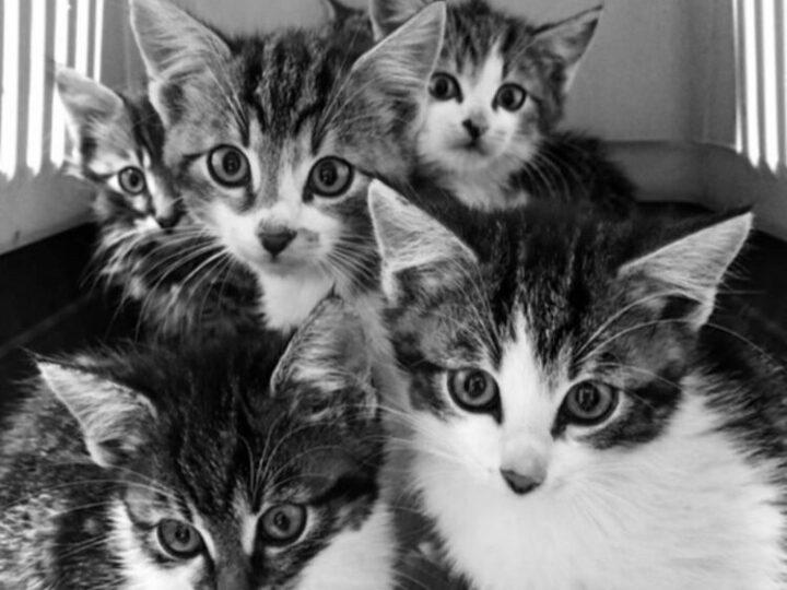 Koťátka z Budějovic
